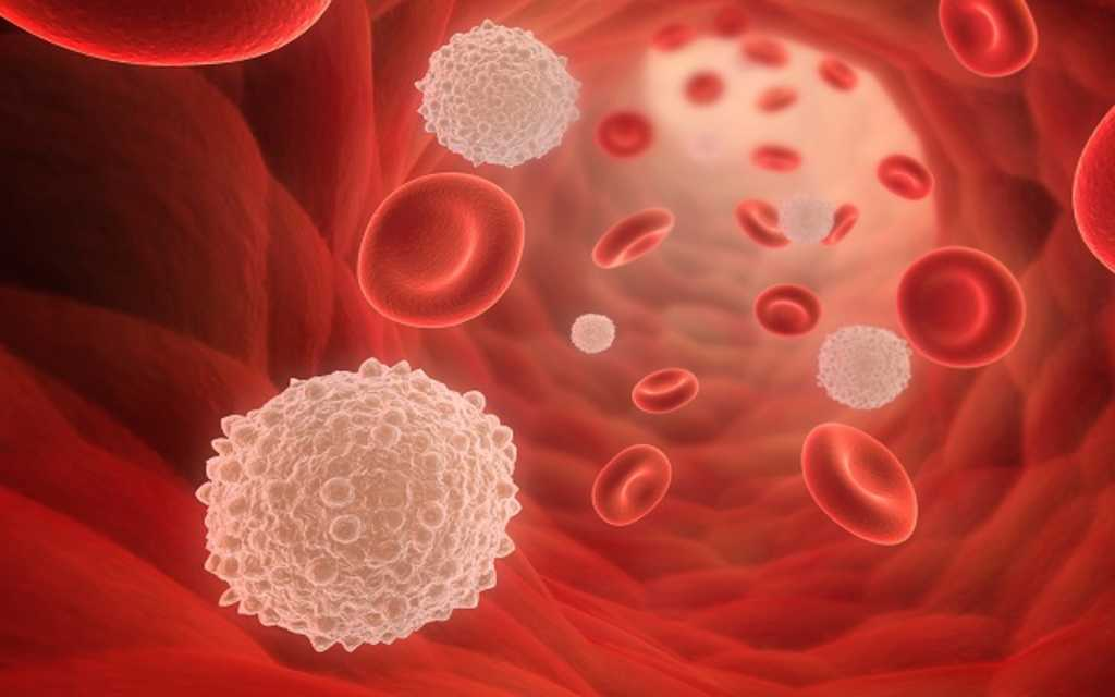 blood_cell