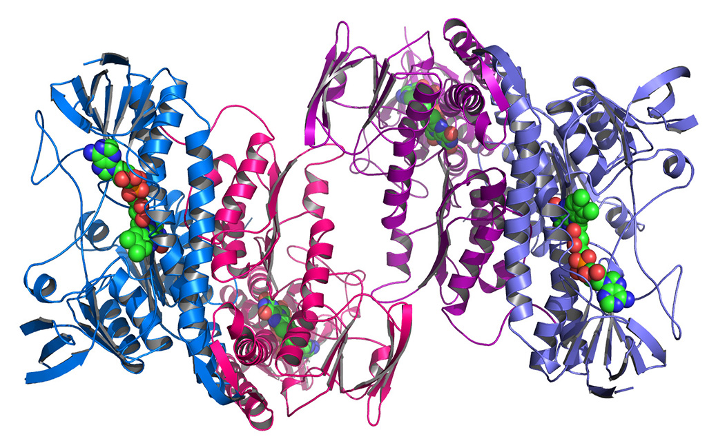 protein_structure